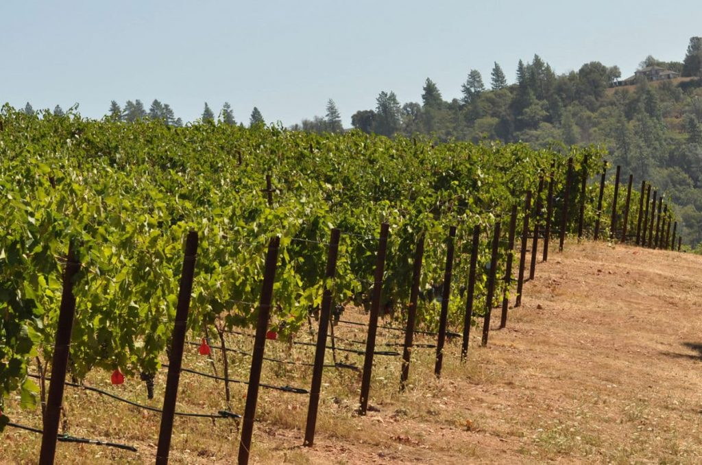 Due Vigne Winery Vineyard